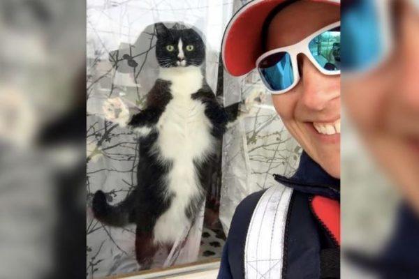 кошка убийца, почтальон,