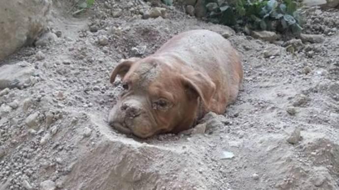Собаку похоронили заживо1
