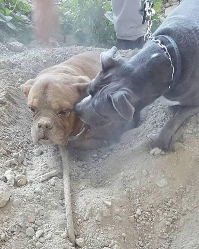 Собаку похоронили заживо2