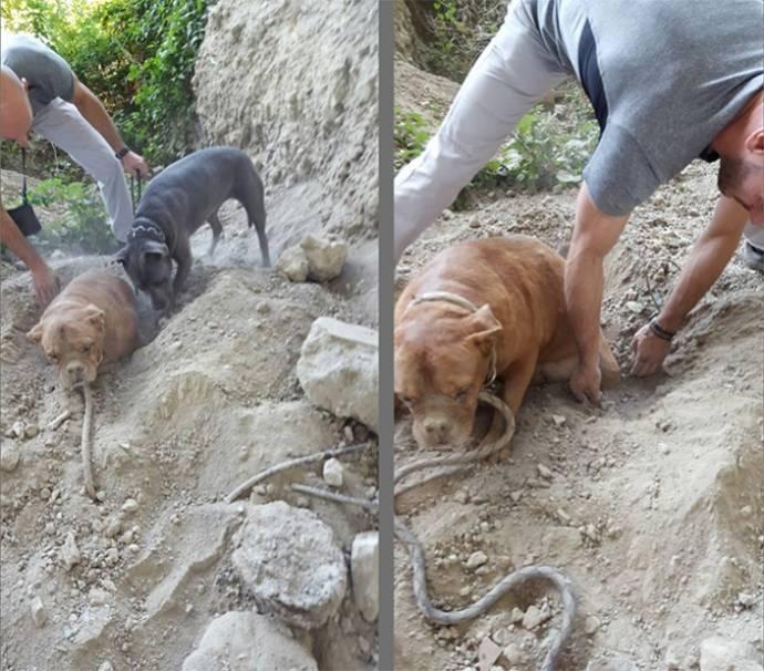 Собаку похоронили заживо3