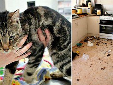 жестокость, запертые животные, кошки,