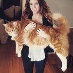 длинный кот, кот гигант,