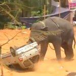 слон, разрушение, ярость слона,