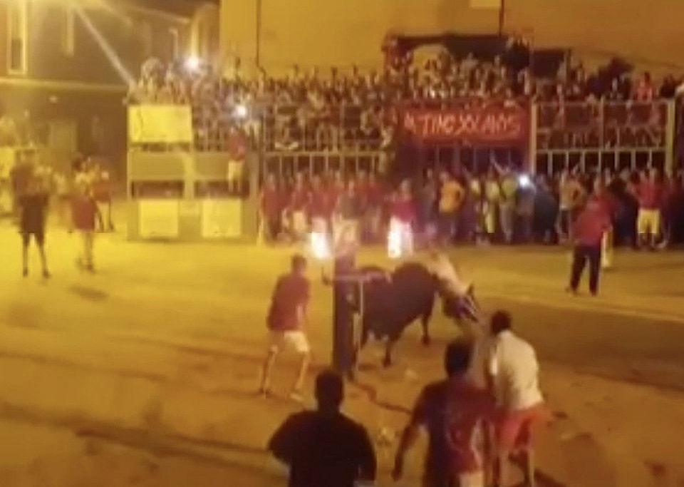 Бык покончил с собой после того, как ему подожгли рога