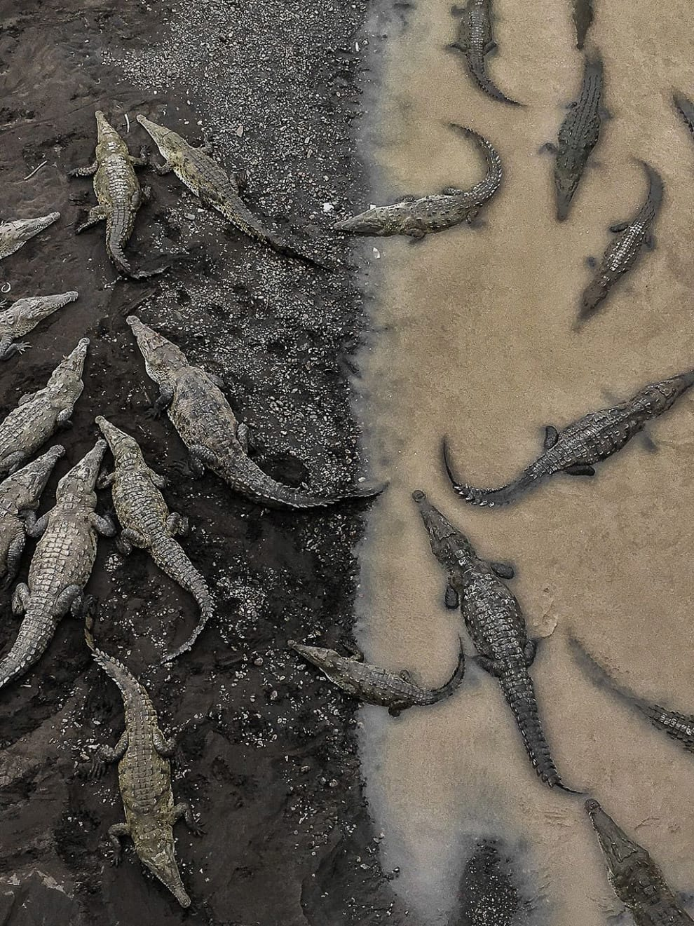Лежбище крокодилов в Коста Рике