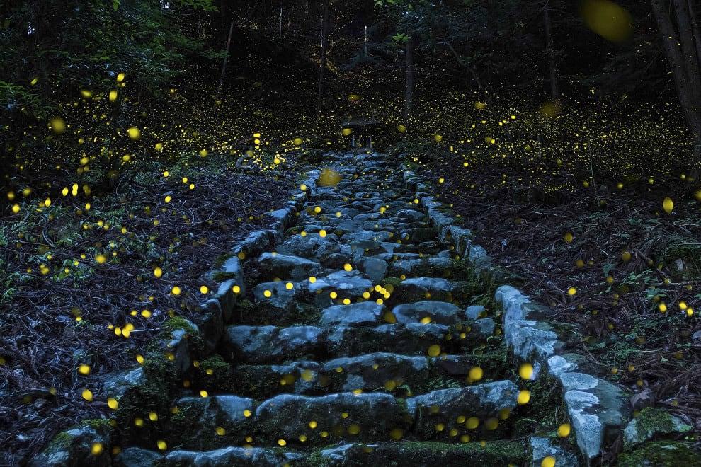 Светлячки в Японии