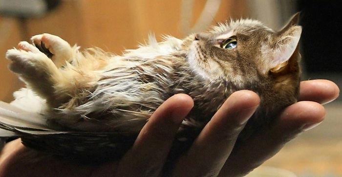гибриды кошек и птиц, объединить кошек и птиц, скрестить кошек и птиц, кошки и птицы фотошоп
