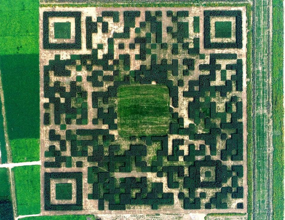 В КНР высадили парк в виде гигантского QR-кода