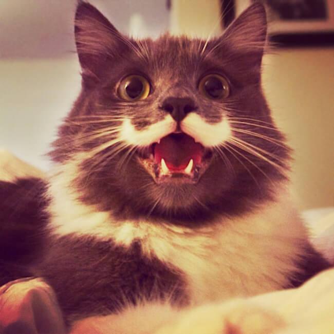 Мимишные котики с улыбкой